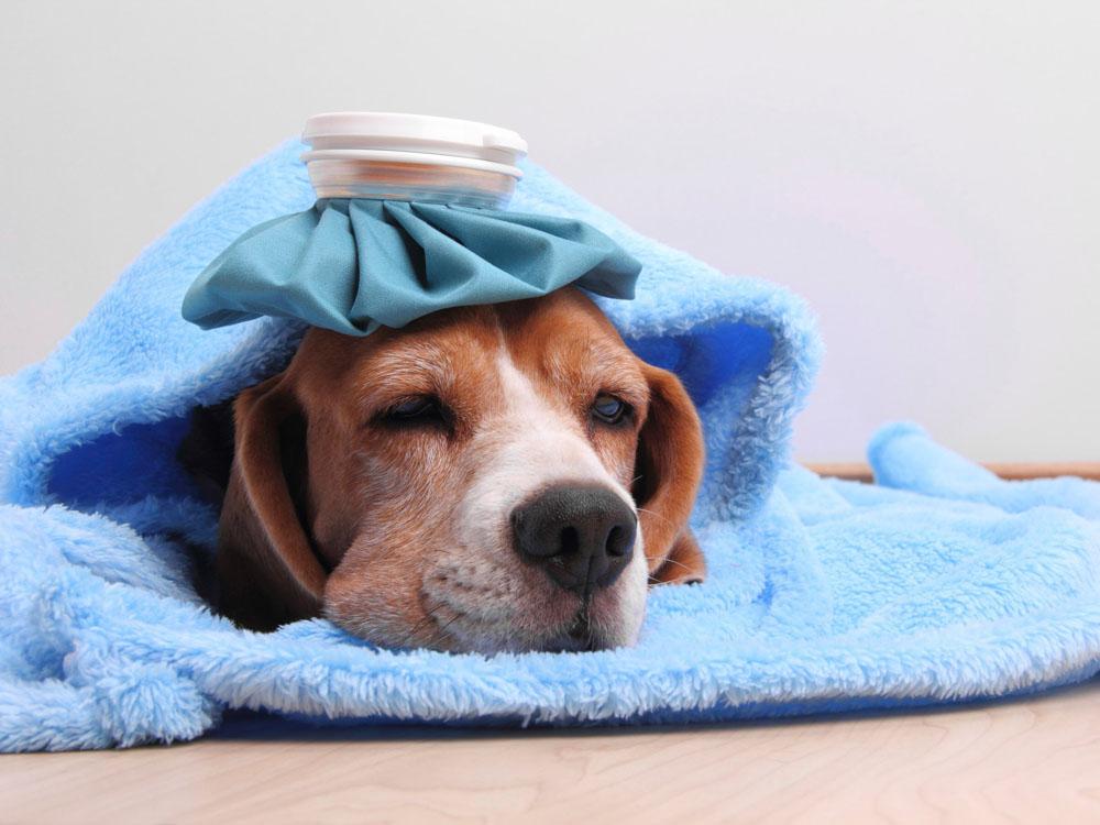 Các Loại Bệnh Rất Thường Gặp Ở Chó Và Cách Chữa Trị Nhanh Chóng