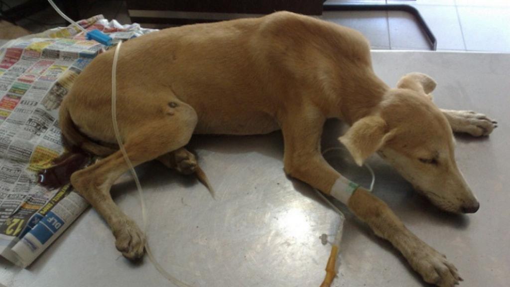 chó bị viêm đường ruột